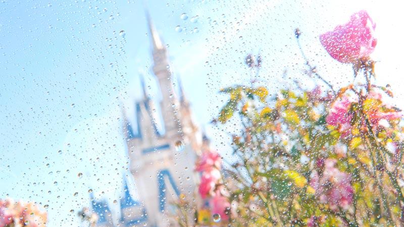 雨の日ディズニー のイメージ